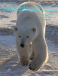 Ecology and Evolution cover featuring a polar bear